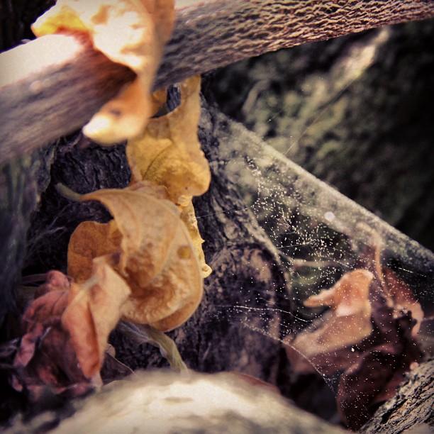 Foto - Herbst im Netz gefangen