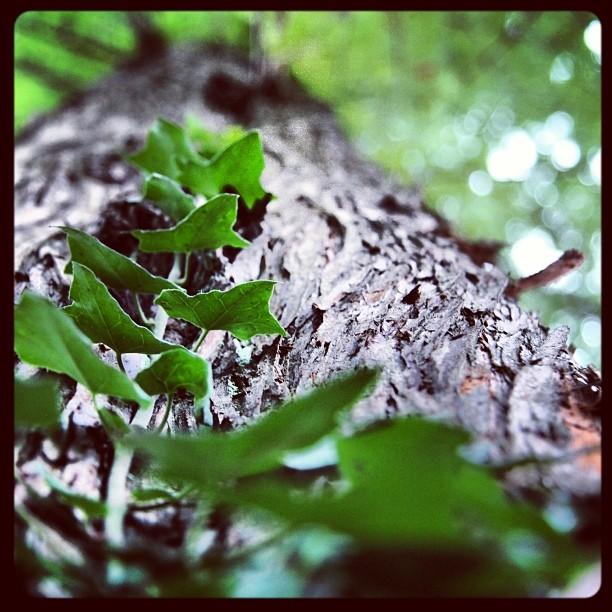 Foto - #Baum Bildidee von @SabrinaRotschop