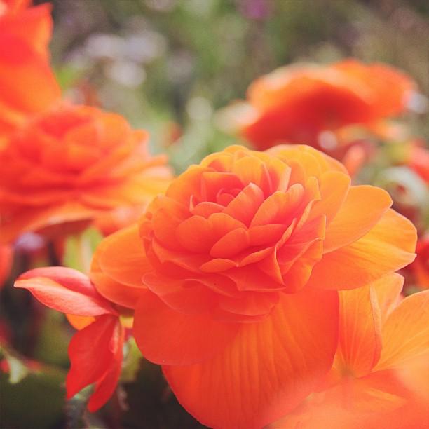 Foto - Ja sorry, schon wieder eine #Blume. Ich mag Blumen.