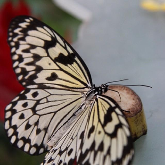 Foto - #Schmetterling :) #hamm #Maxipark