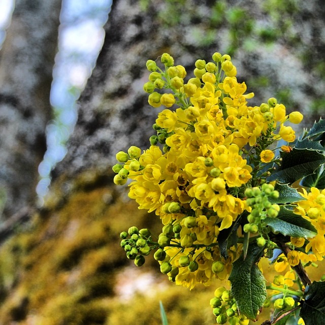 Foto - #Blume #Sauerland #Baum #MirFälltKeinTextZumBildEin