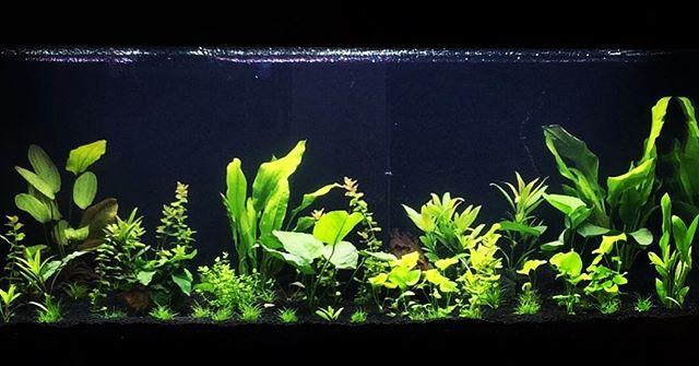 Foto - Mein Aquarium mit Pflanzen aber noch ohne Fische
