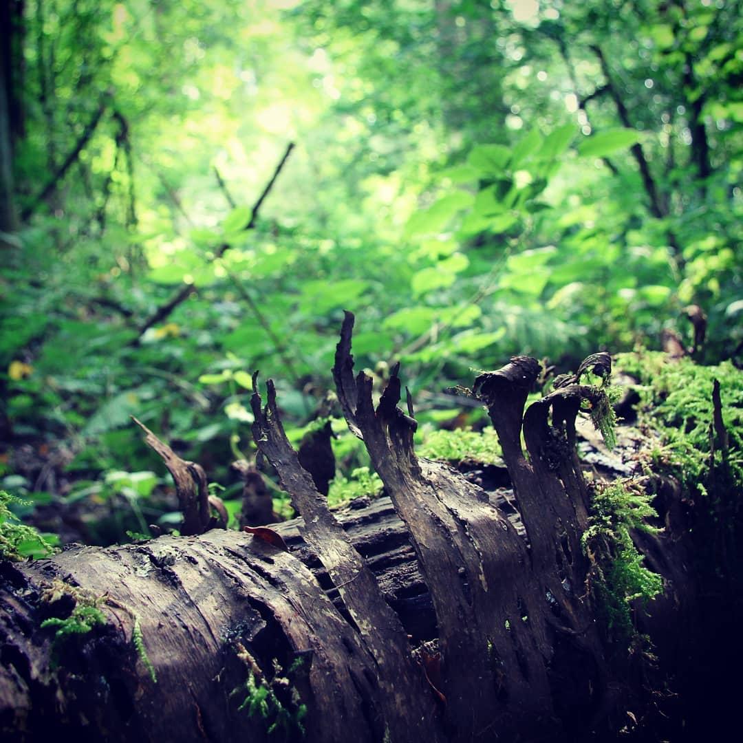 Foto - Neandertal Wald