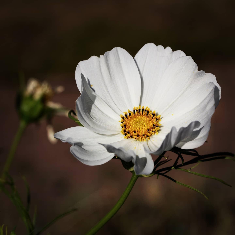 Foto - Blüte im Nordpark